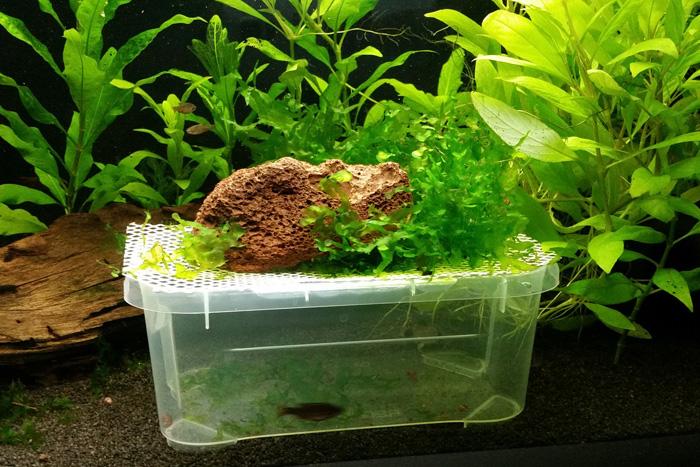 Ablaichschale mit Gitter und Pflanzen
