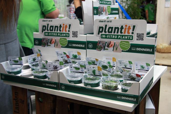 In vitro-Pflanzen werden in praktischen Verkaufsdisplays präsentiert
